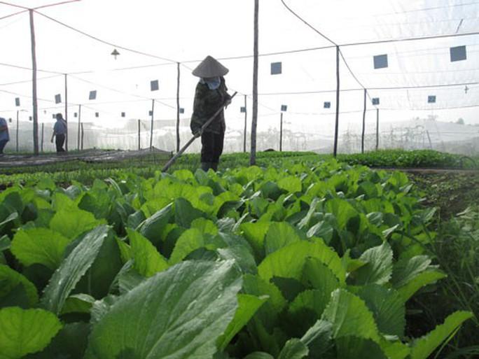 Khởi nghiệp mảng hữu cơ cần sức bền - Ảnh 1.