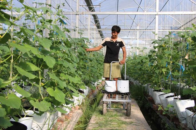 Kỹ sư nông nghiệp Israel miệt mài với mô hình trồng dưa lưới ở miền Tây  - Ảnh 1.