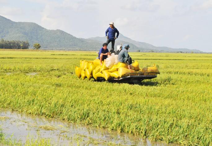 Hàng chục ngàn ha lúa vùng Tứ giác Long Xuyên bị nước lũ uy hiếp - Ảnh 4.