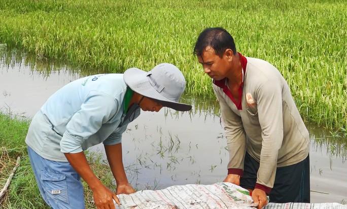 Hàng chục ngàn ha lúa vùng Tứ giác Long Xuyên bị nước lũ uy hiếp - Ảnh 5.