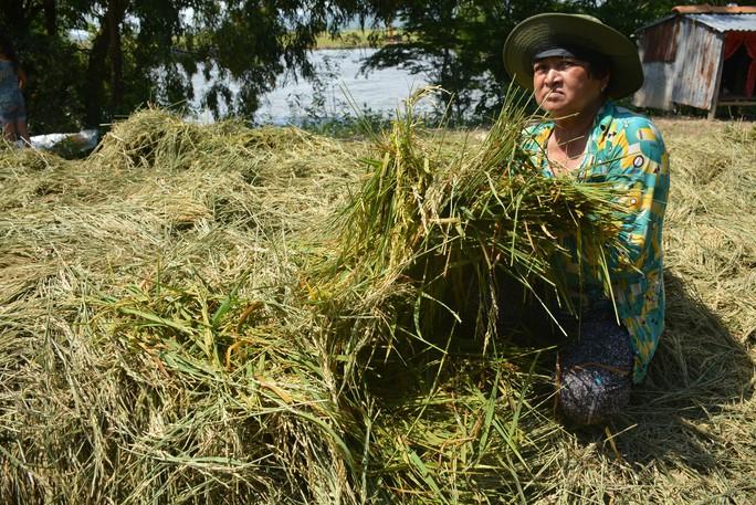 Hàng chục ngàn ha lúa vùng Tứ giác Long Xuyên bị nước lũ uy hiếp - Ảnh 1.