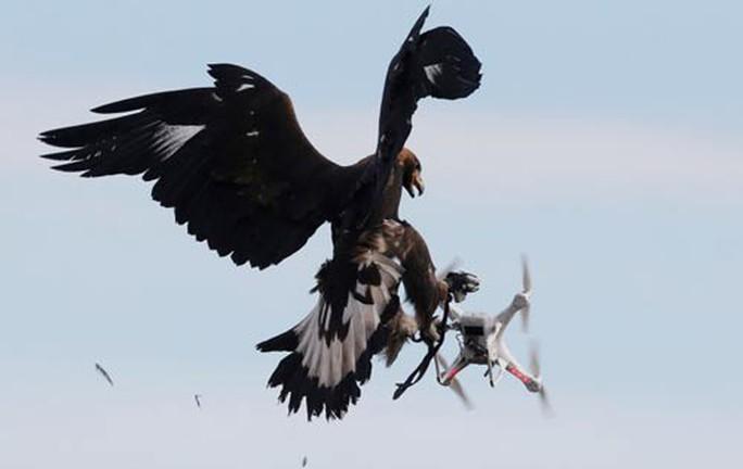 Hiểm họa khủng bố từ robot bay: Hung thần móng vuốt nhọn - Ảnh 1.