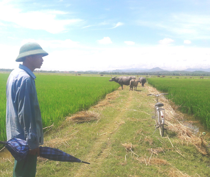 Nhiều khoản phí lạ ở Quảng Bình: Trâu, bò, vịt, máy cày,… ra đồng phải đóng phí - Ảnh 1.