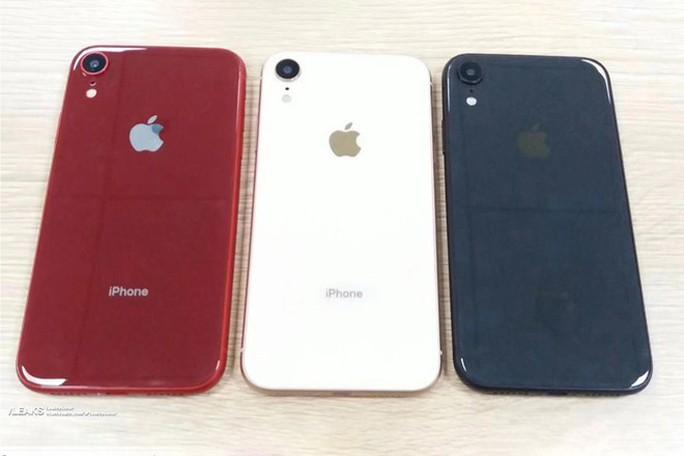 Lộ ảnh iPhone Xc giá rẻ trước ngày ra mắt - Ảnh 2.