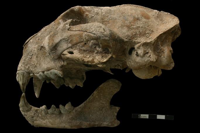 Bí ẩn quái thú chết cùng cô gái trong mộ cổ Maya - Ảnh 1.