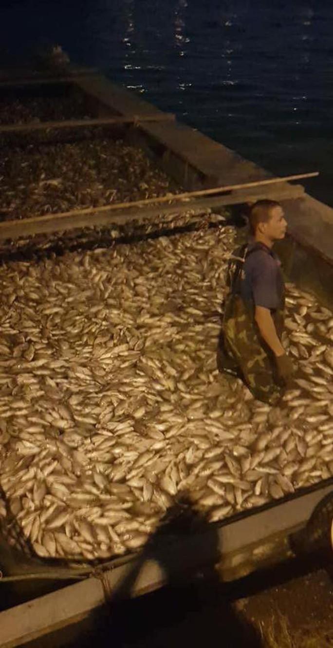 Hàng tấn cá lại chết trắng trên hồ Tây - Ảnh 2.