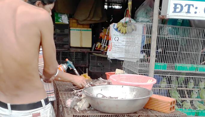 Nhiều bức xúc về video tàn sát chim trời ở chợ chim miền Tây - Ảnh 3.