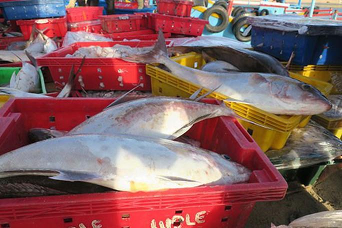 Sướng mắt với chợ cá tươi roi rói vào buổi sớm mai ở Bãi Phủ - Ảnh 6.