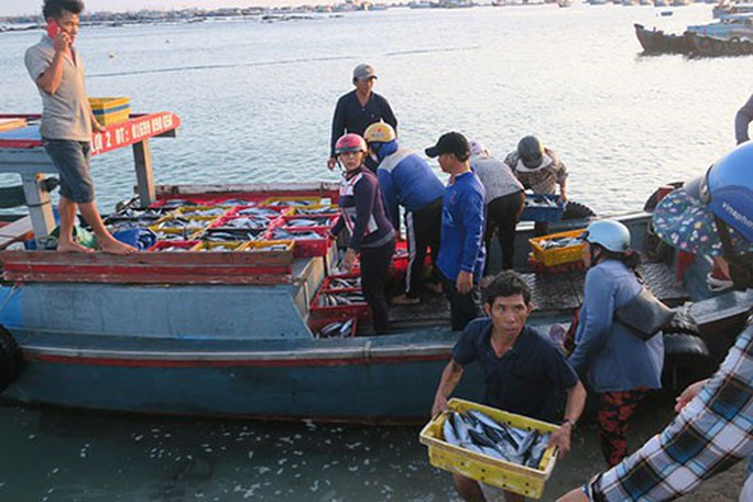 Sướng mắt với chợ cá tươi roi rói vào buổi sớm mai ở Bãi Phủ - Ảnh 1.