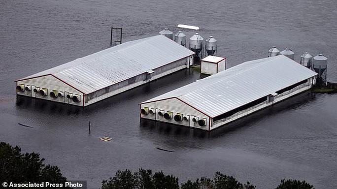 Mỹ: Rắn độc xuất hiện trong nước lũ sau bão - Ảnh 3.
