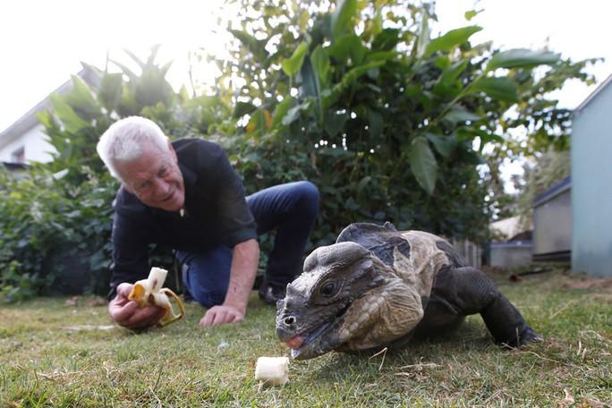Cụ ông nuôi hơn 400 động vật bò sát trong nhà - Ảnh 7.