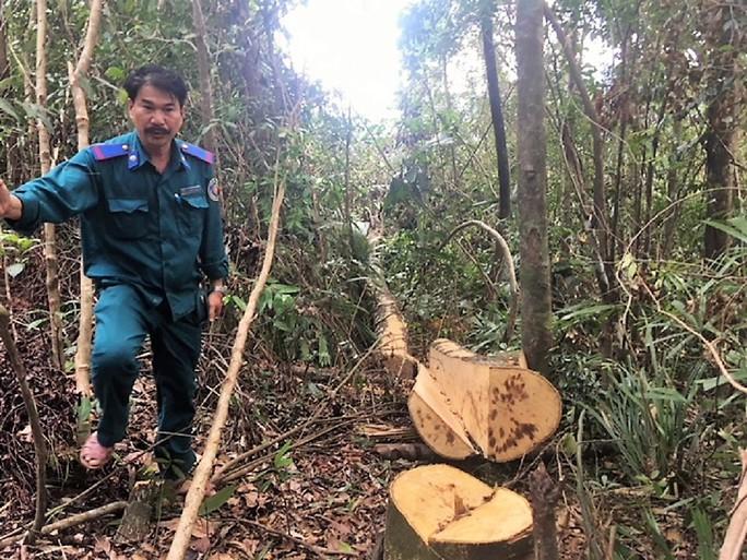 Truy trách nhiệm vụ phá rừng phòng hộ A Lưới - Ảnh 1.