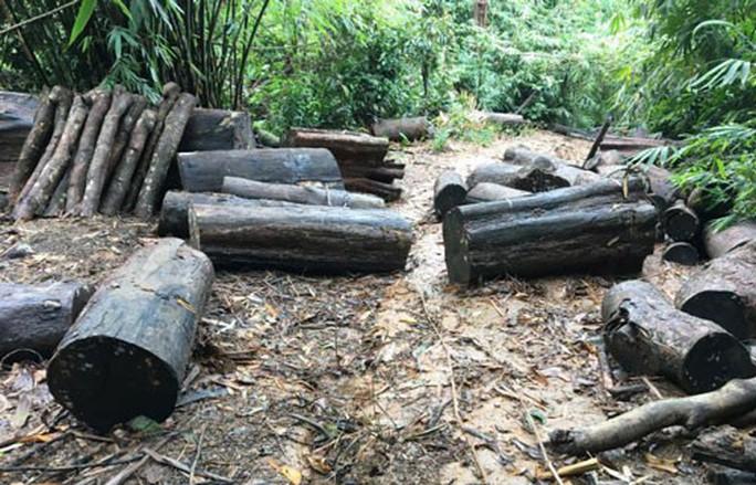 Khởi tố vụ án phá rừng ở Đạ Tẻh - Ảnh 1.