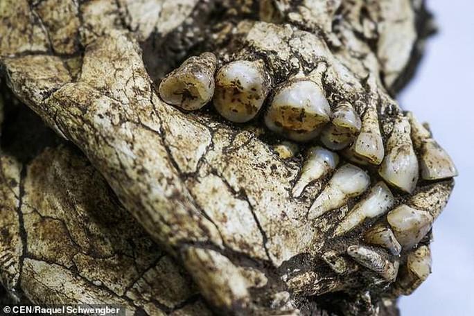 Làm đường, đào trúng… hai bộ hài cốt bộ lạc Amazon - Ảnh 2.