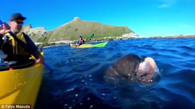 Hải cẩu quật bạch tuộc vào mặt người trên thuyền - Ảnh 1.