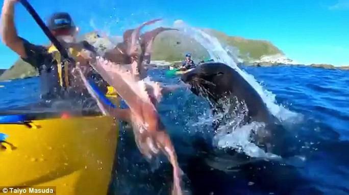 Hải cẩu quật bạch tuộc vào mặt người trên thuyền - Ảnh 2.