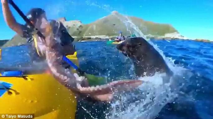Hải cẩu quật bạch tuộc vào mặt người trên thuyền - Ảnh 3.