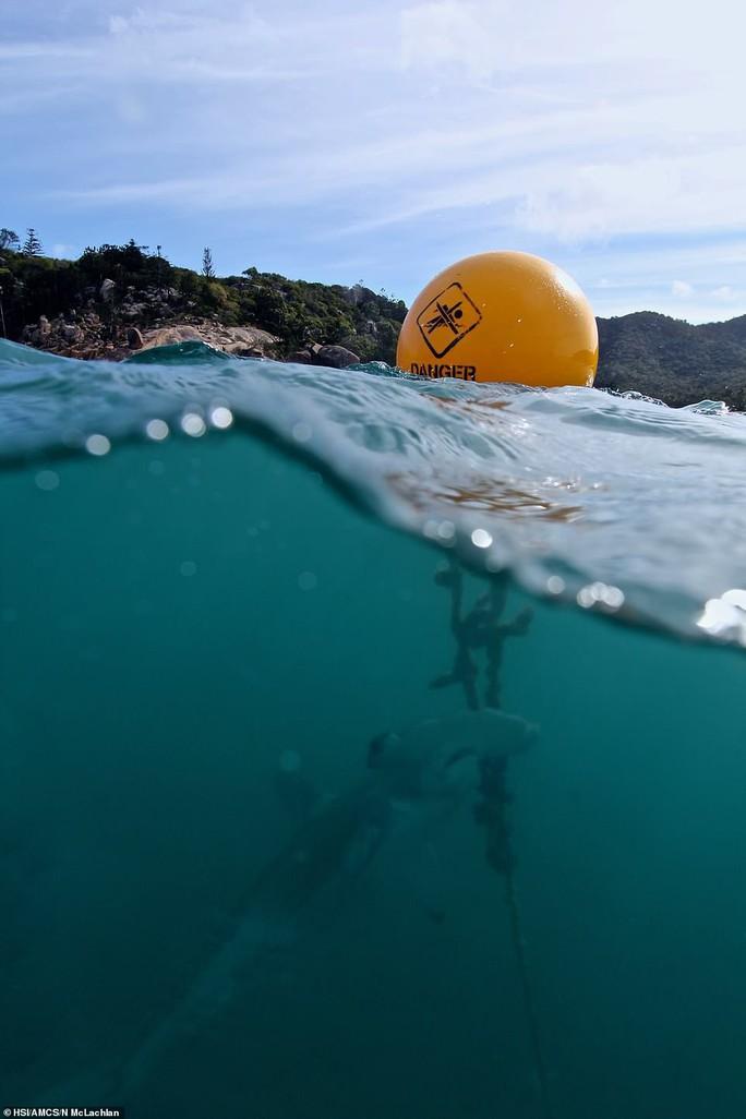 Hàng ngàn cá mập bị đánh bẫy tàn bạo để bảo vệ con người - Ảnh 5.