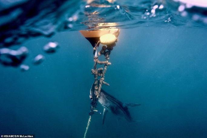 Hàng ngàn cá mập bị đánh bẫy tàn bạo để bảo vệ con người - Ảnh 3.