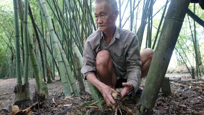 """Lão nông 83 tuổi tăng thu nhập nhờ """"níu kéo"""" lũy tre làng - Ảnh 1."""