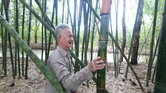 """Lão nông 83 tuổi tăng thu nhập nhờ """"níu kéo"""" lũy tre làng - Ảnh 4."""