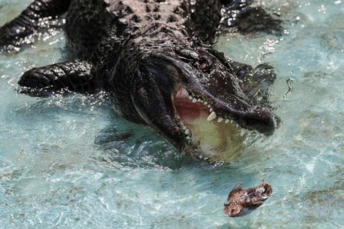 Cá sấu huyền thoại - Ảnh 1.