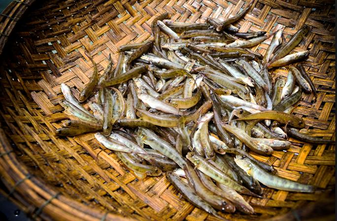 Đua nhau săn con cá nhỏ nhưng độc ở  đầm Chuồn - Ảnh 2.