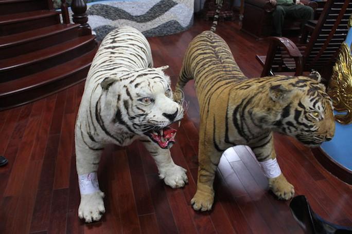 Bị tạm giam vì chứa 2 bộ da hổ quý hiếm nhồi bông - Ảnh 1.