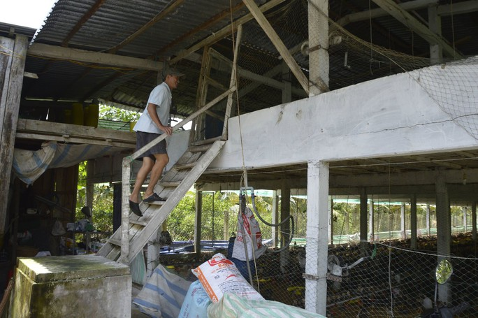 """Chuồng 2 tầng nuôi gà nòi lai giúp một nông dân """"hốt bạc"""" - Ảnh 3."""