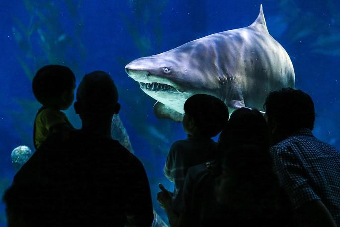 Con người và cá mập có cùng tổ tiên - Ảnh 1.