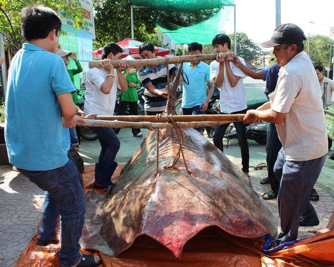 """Bắt được """"quái ngư nước ngọt"""" hơn 220 kg, cả chục người gánh mới nổi - Ảnh 1."""