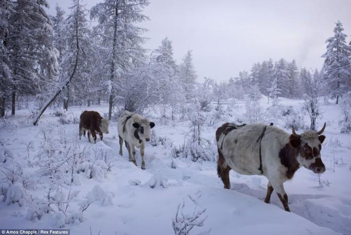 Ngôi làng Cực lạnh từng chịu đựng nhiệt độ -71,2 độ C - Ảnh 3.