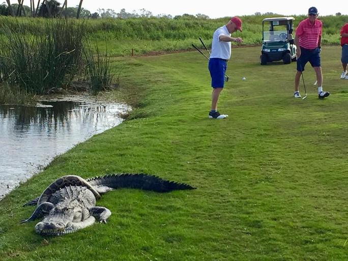 Cận cảnh cá sấu và trăn quấn quýt trên sân golf - Ảnh 2.
