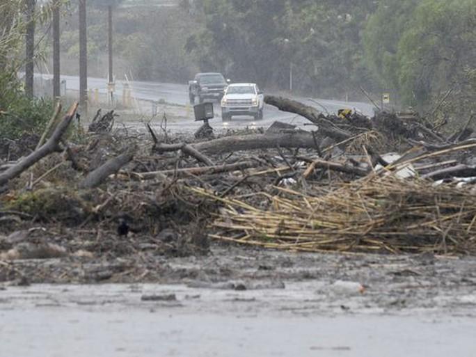 Cây cối bị bão đốn ngã ở khu vực Carpinteria. Ảnh: AP