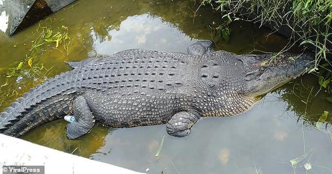 Cá sấu nhảy lên tường cao 2,5 m, giết chết nhà khoa học nữ - Ảnh 2.