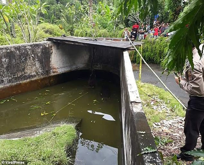 Cá sấu nhảy lên tường cao 2,5 m, giết chết nhà khoa học nữ - Ảnh 3.