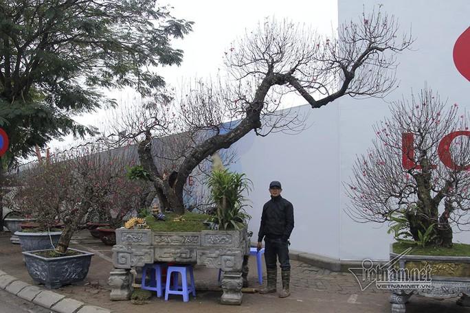 Bất ngờ với cây đào ven đường, gốc mục ruỗng có giá đến 120 triệu đồng - Ảnh 1.