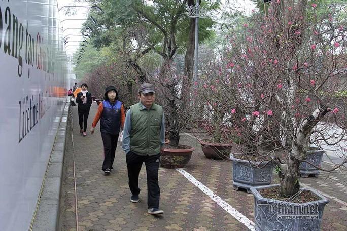 Bất ngờ với cây đào ven đường, gốc mục ruỗng có giá đến 120 triệu đồng - Ảnh 17.