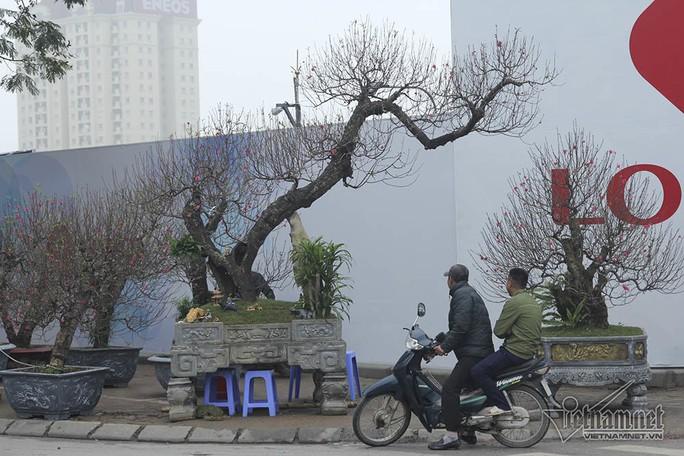 Bất ngờ với cây đào ven đường, gốc mục ruỗng có giá đến 120 triệu đồng - Ảnh 2.