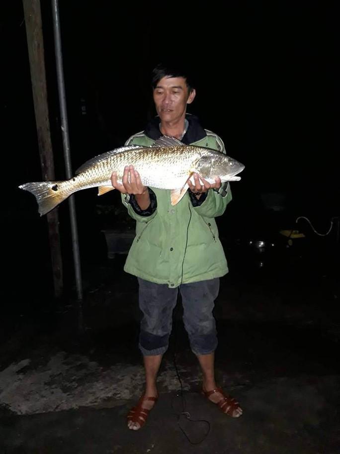 Câu được cá lạ vàng óng nghi là cá sủ vàng quý hiếm - Ảnh 1.