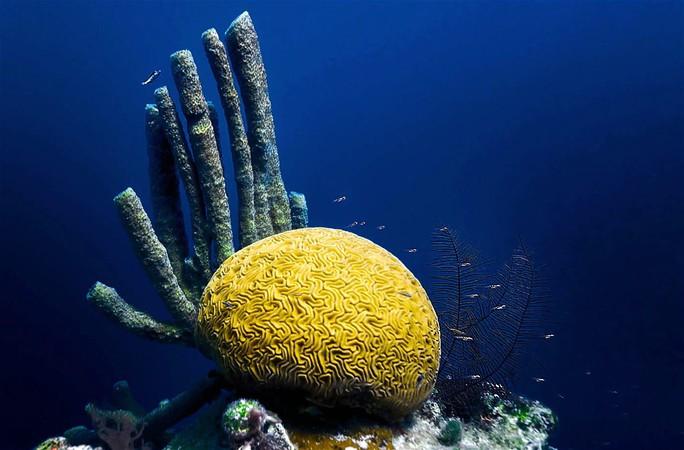 Giải mã bí ẩn lớn nhất đại dương - Ảnh 5.