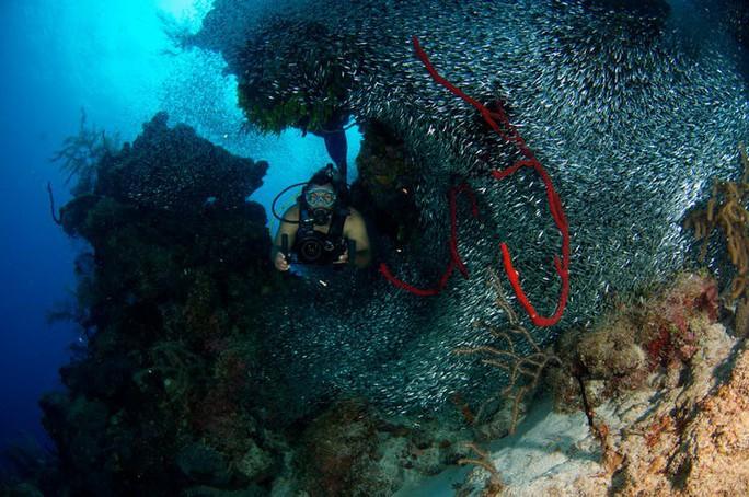 Giải mã bí ẩn lớn nhất đại dương - Ảnh 12.