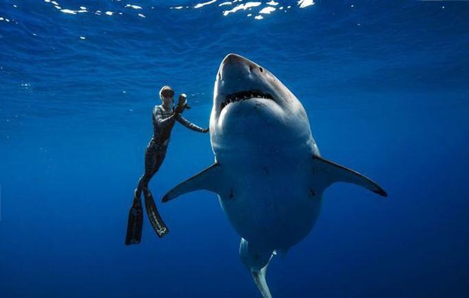 """Cá mập trắng """"quái vật"""" bất ngờ xuất hiện ngoài khơi Hawaii - Ảnh 2."""