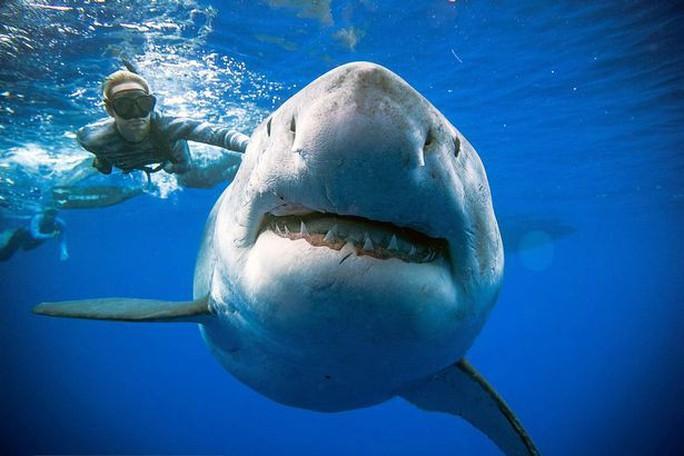"""Cá mập trắng """"quái vật"""" bất ngờ xuất hiện ngoài khơi Hawaii - Ảnh 1."""