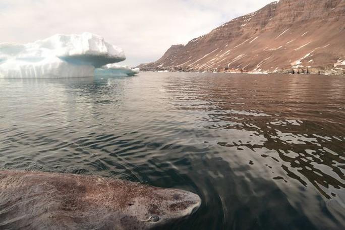 Lão cá mập sống tới 272 năm - Ảnh 6.