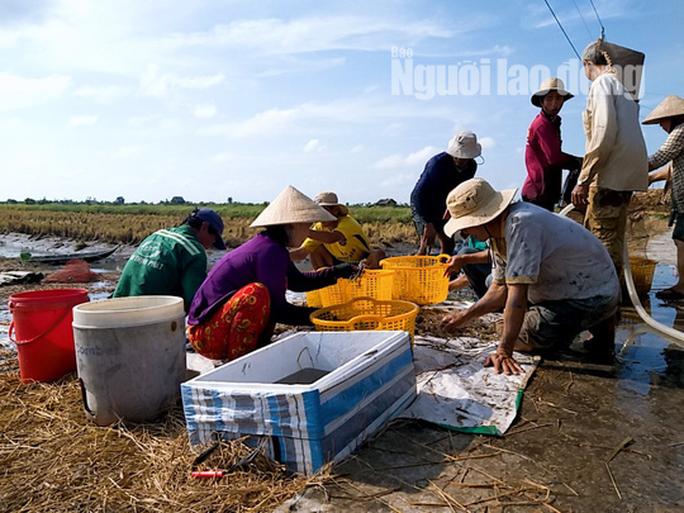 Cận Tết, về Cà Mau xem người dân quậy bùn bắt tôm càng xanh - Ảnh 10.