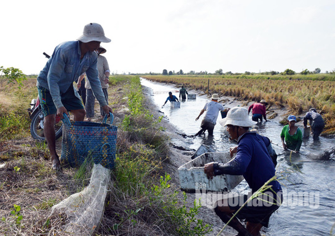 Cận Tết, về Cà Mau xem người dân quậy bùn bắt tôm càng xanh - Ảnh 5.