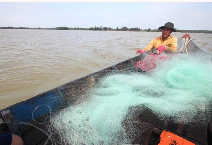 Từng đàn cá đối từ biển ngược vào cửa sông An Hòa - Ảnh 2.