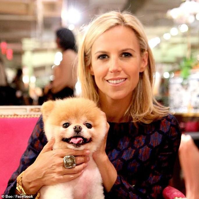 Chú chó Boo đáng yêu nhất thế giới qua đời - Ảnh 6.