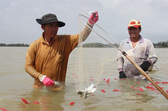 Từng đàn cá đối từ biển ngược vào cửa sông An Hòa - Ảnh 4.